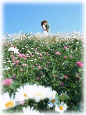 草原イメージ